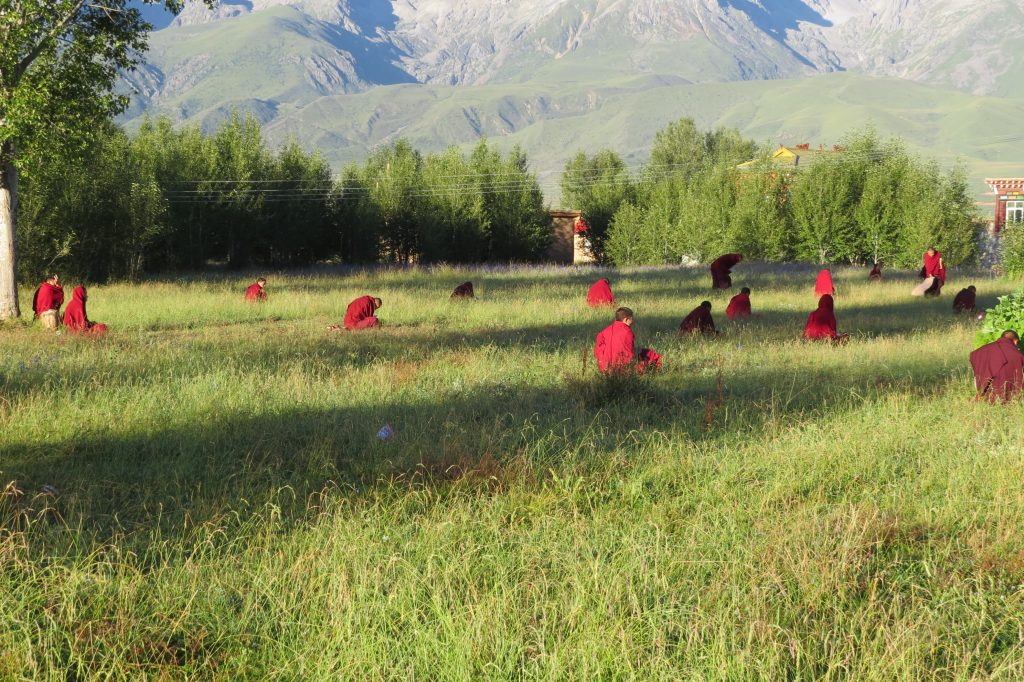 Monks memorizing in the field in front of the Monastic College