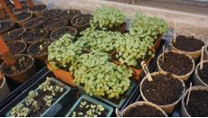 Growing Where We Are: Sharing Histories & Futures of Urban Agriculture
